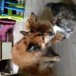 Mika en Pippin
